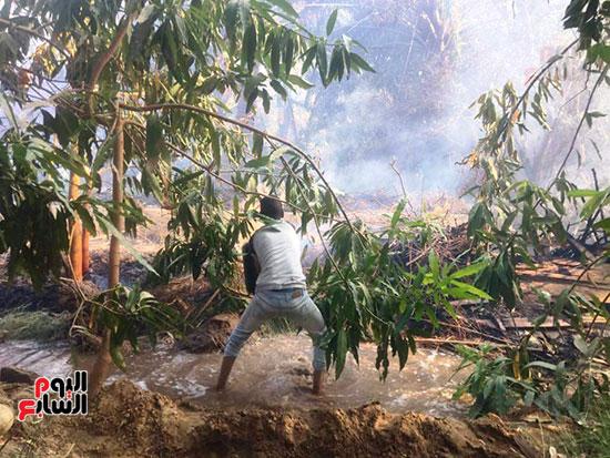 حريق-هائل-في-مزارع-نخيل-بقرية-القصر-بالوادي-الجديد-(10)