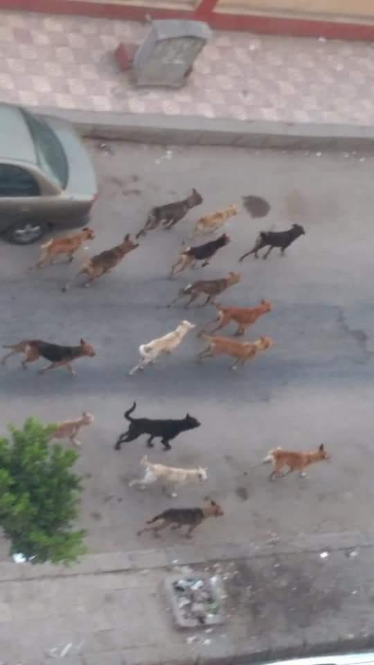 الكلاب الضالة بامتداد السبعين