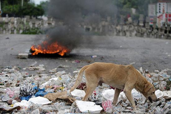 كلب-يمشي-وسط-القمامة-عند-أحد-المتاريس