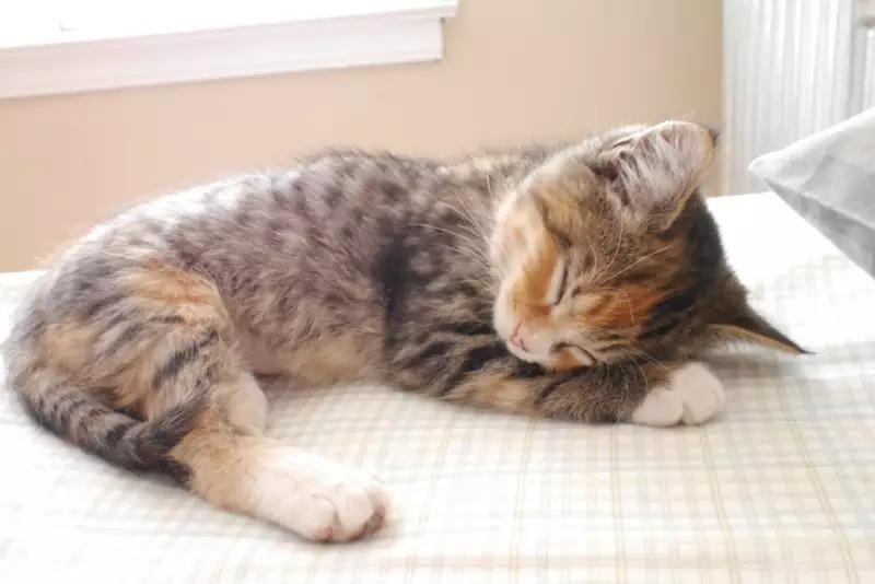 نوم القطط