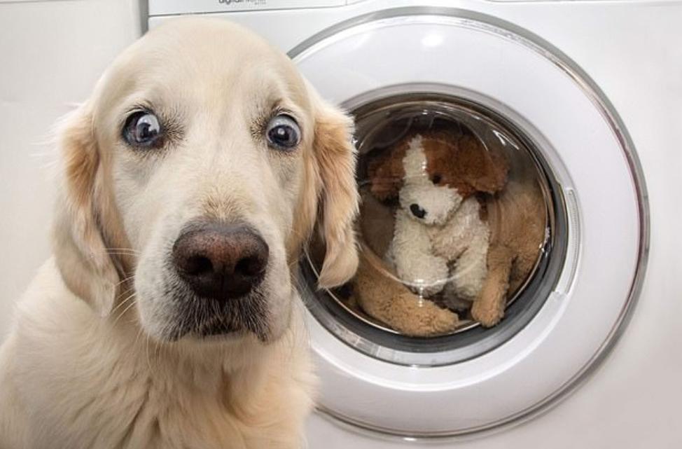 الصدمة على وجه الكلب
