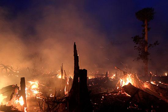 النار تشتعل فى الأشجار