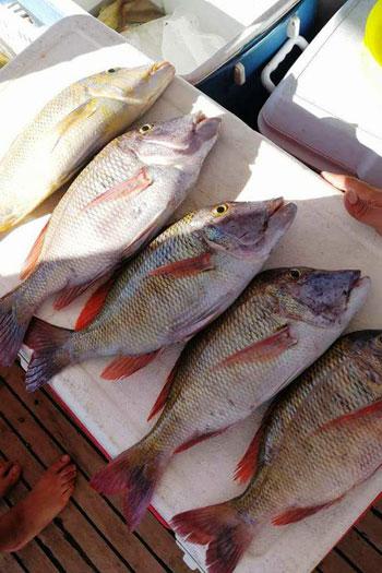 أغلى أسماك البحر الأحمر (4)