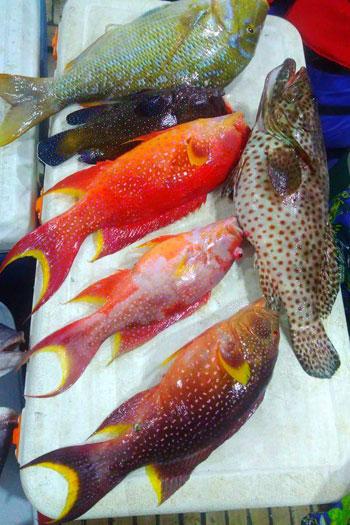 أغلى أسماك البحر الأحمر (5)