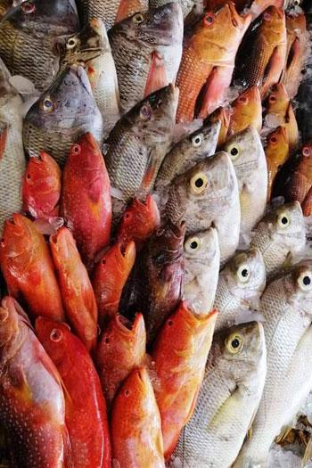 أغلى أسماك البحر الأحمر (7)