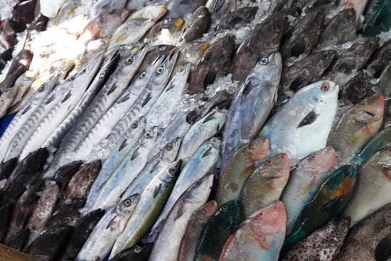 أغلى أسماك البحر الأحمر (3)