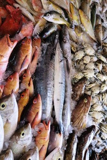 أغلى أسماك البحر الأحمر (8)