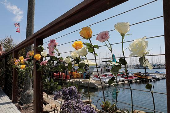 وضع الزهور فى نصب تذكارى للضحايا