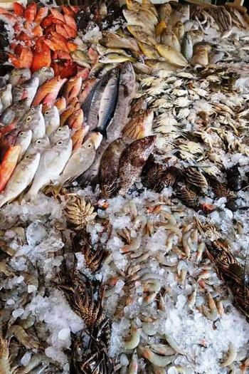 أغلى أسماك البحر الأحمر (6)