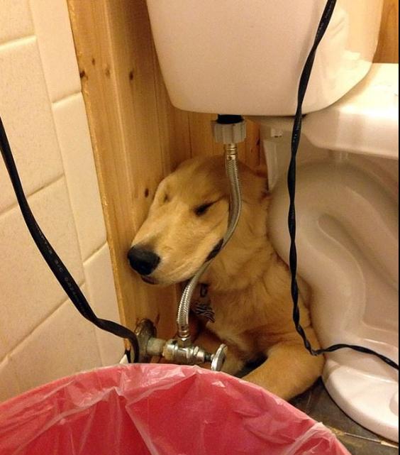 كلب خلف مرحاض