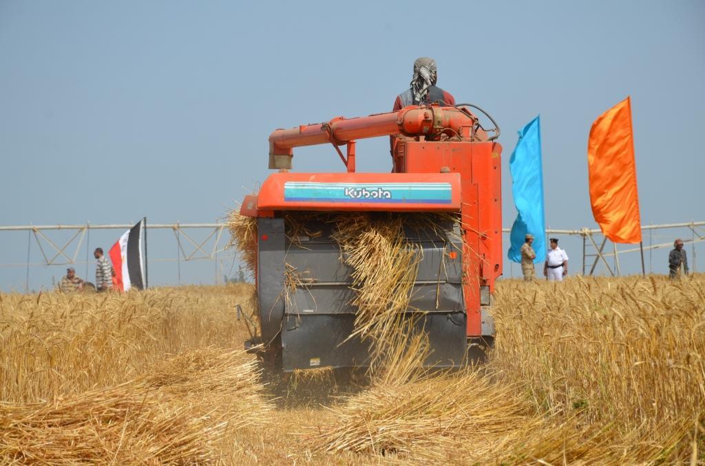 11- عملية الحصاد للقمح