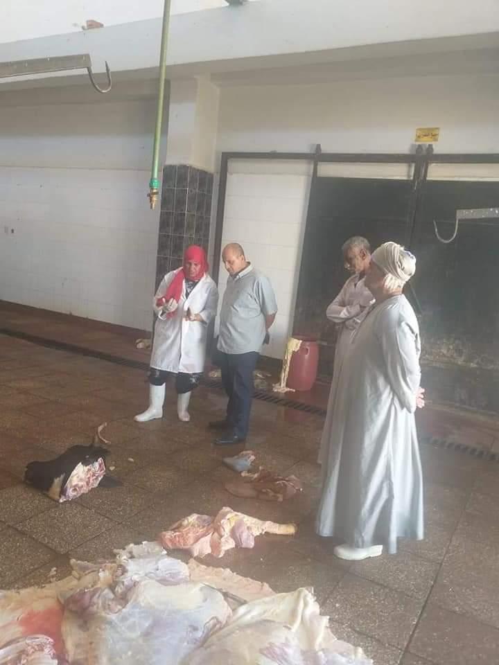 إعدام لعجل مصاب بمرض الصفراء بالوادى الجديد (4)