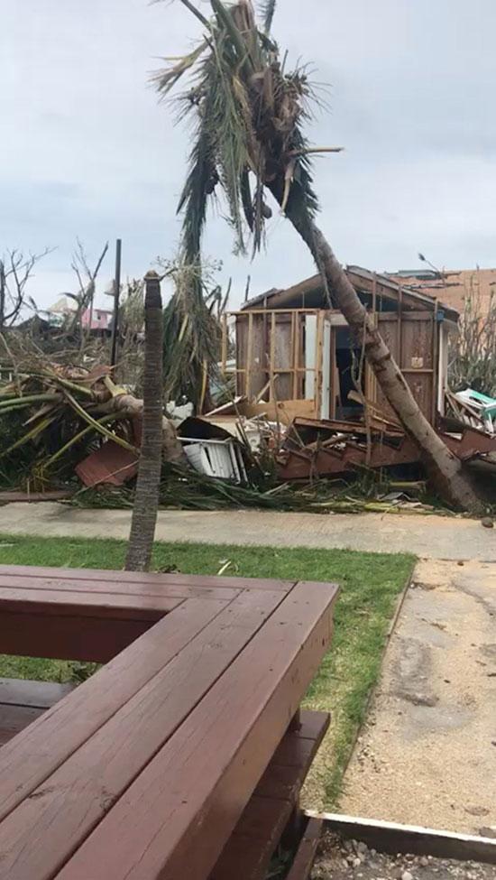 منازل سقطت عليها الأشجار