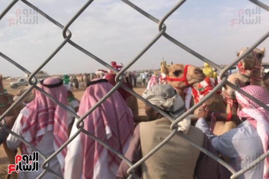 مهرجان-ولى-العهد-لسباقات-الهجن-العربية--(4)