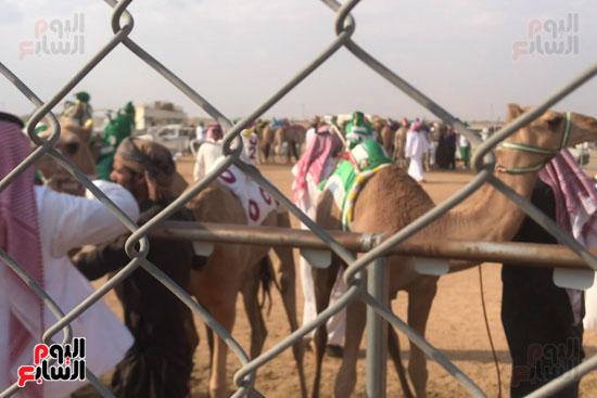 مهرجان-ولى-العهد-لسباقات-الهجن-العربية--(1)