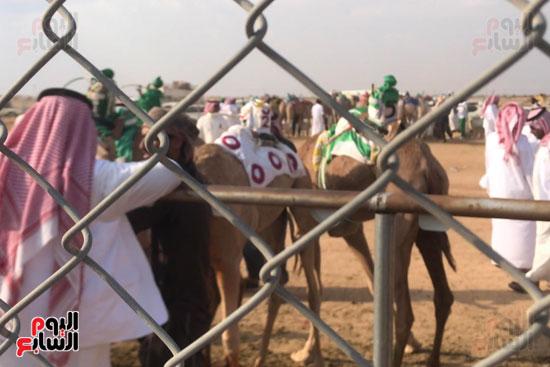 مهرجان-ولى-العهد-لسباقات-الهجن-العربية--(11)