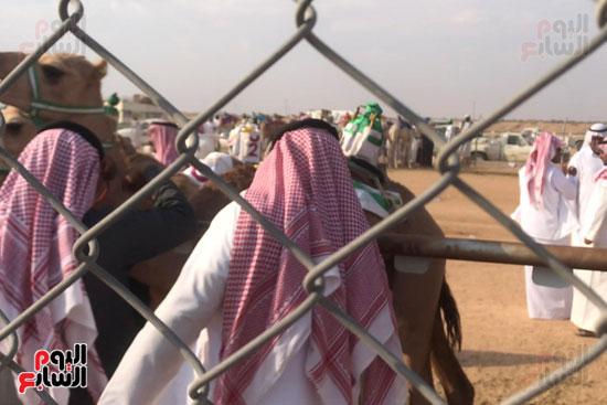 مهرجان-ولى-العهد-لسباقات-الهجن-العربية--(2)
