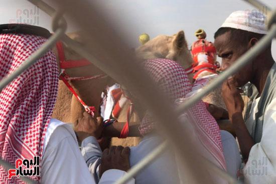 مهرجان-ولى-العهد-لسباقات-الهجن-العربية--(10)