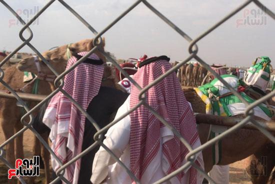 مهرجان-ولى-العهد-لسباقات-الهجن-العربية--(3)