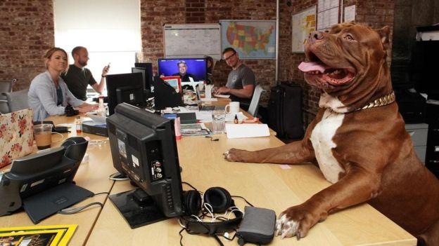 أتيكيت إصطحاب الكلب لمكتب العمل (2)