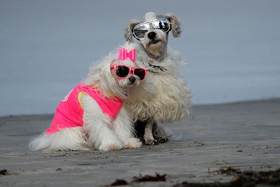 نظارات وسترات ملونة للكلاب