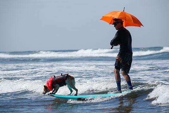 صاحب كلب يتابعه خلال المسابقة
