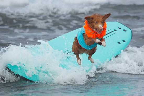 كلب يحاول القفز فى المياه