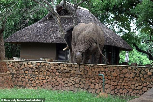 بعج عبور الفيل للسور