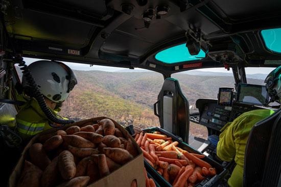 موظفوا الحياة البحرية بأستراليا داخل الهليكوبتر و معهم الجزر