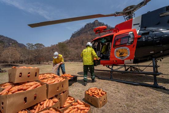 موظفو خدمة الحياة البرية بأستراليا يحملون الجزر بالطائرات التابعة لهم