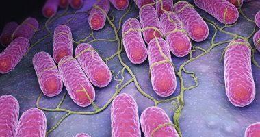 بكتيريا السالمونيلا