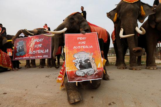 الفيلة-المشاركون