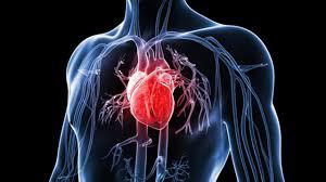 زراعة القلب
