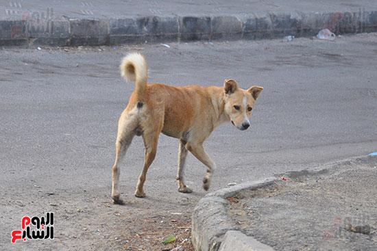 كلاب ضالة بين العمارات وفى الأحياء