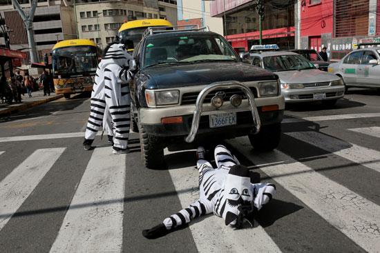 أعضاء من برنامج التعليم فيال يرتدون ملابس حمار وحشي أداء في أحد شوارع لاباز