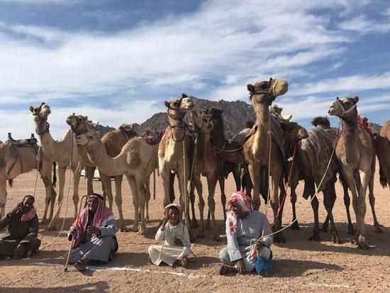 الهجانة يستعدون لمشاركة قوية بمهرجان شرم الشيخ التراثى برعاية الإمارات (7)