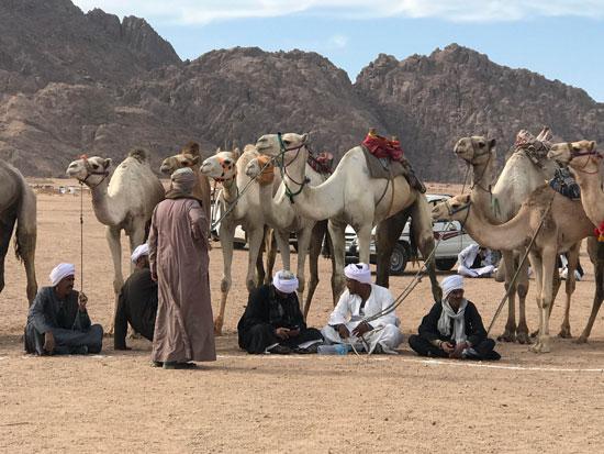 الهجانة يستعدون لمشاركة قوية بمهرجان شرم الشيخ التراثى برعاية الإمارات (5)