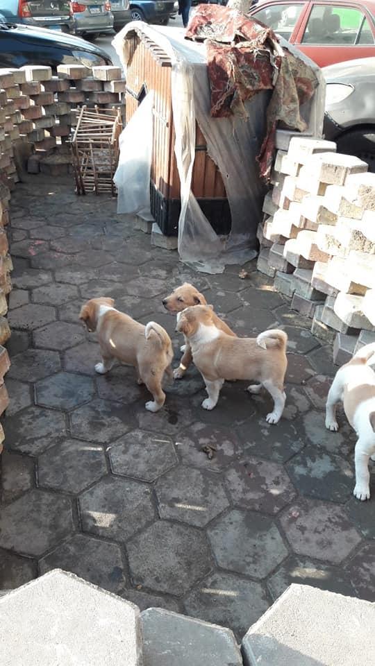منزل الحيوانات الضالة بالشارع