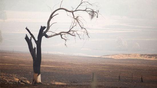 الأشجار لم تنجو من الحرائق