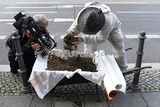 احد-مربى-النحل
