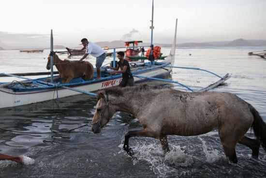 حصان-بعد-إنقاذه