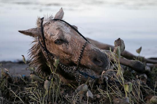 حصان-على-الأرض