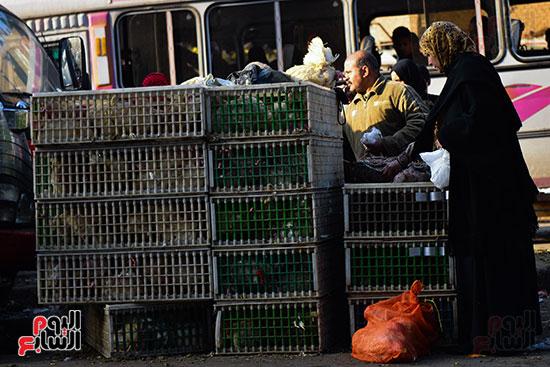 سوق فراخ (6)