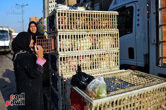 سوق فراخ (10)