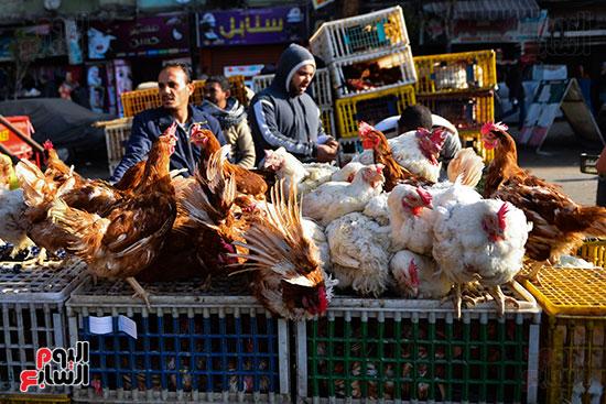 سوق فراخ (19)