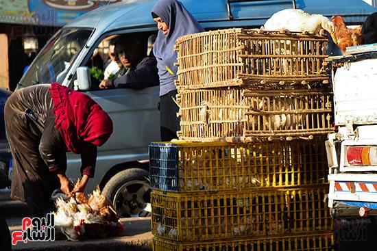 سوق فراخ (7)