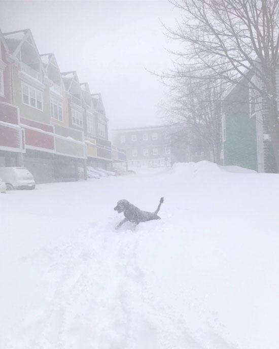 الثلوج تتساقط فى كندا
