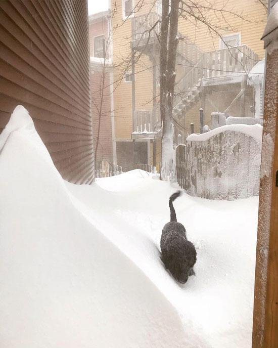 كلب يبحث عن مكان يختبئ من الثلوج