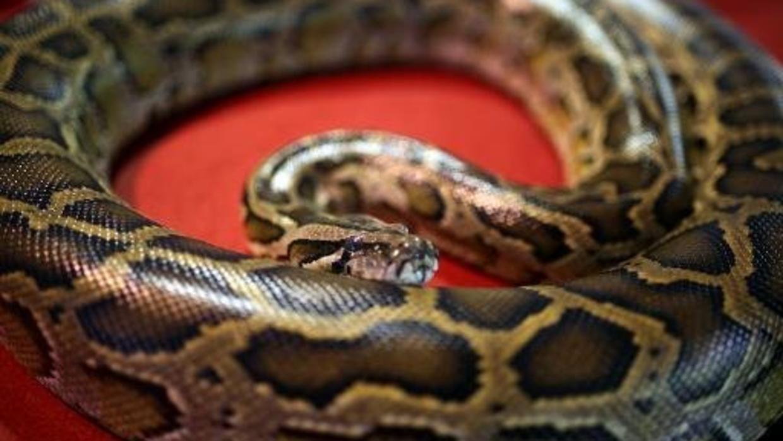 w1240-p16x9-python