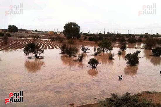 أمطار-الخير-تروي-الزراعات-بالوديان-وتملأ-خزانات-السدود-والآبار-بصحراء-مطروح-(7)